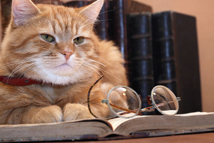 cat-author