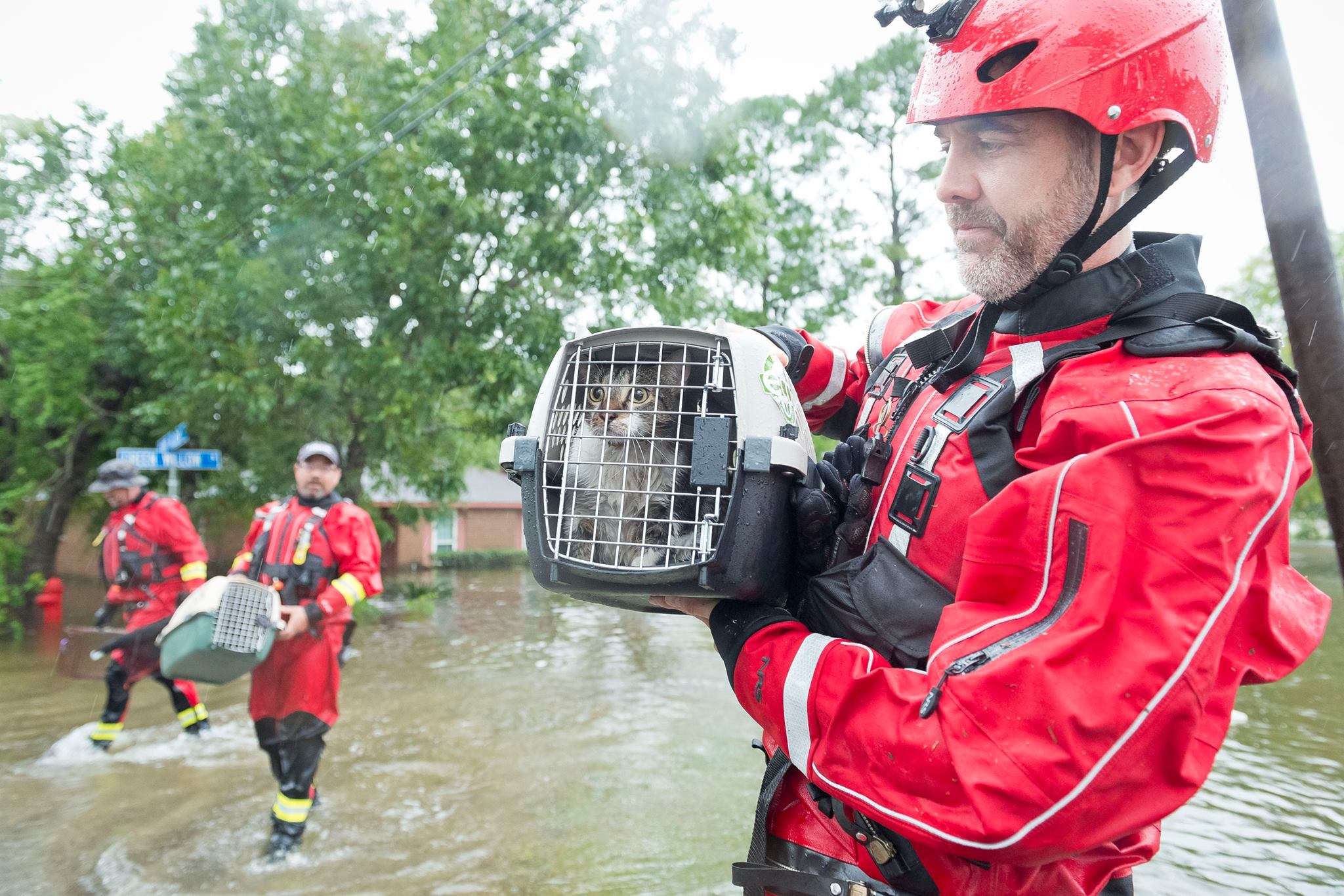 Help the Pets Affected by Recent Hurricanes